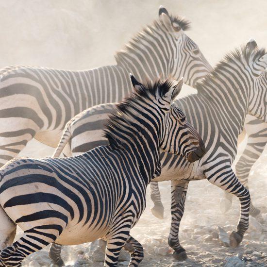 Namibia Etosha Safari - Cullinan Namibia