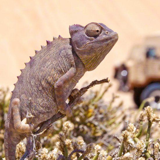 Namibian Southern Odyssey - Cullinan Namibia