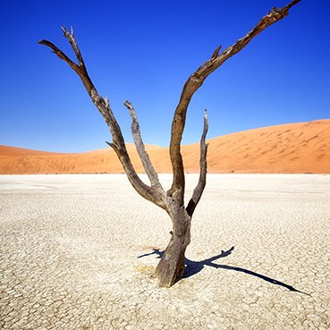 dry desert earth with lone tree
