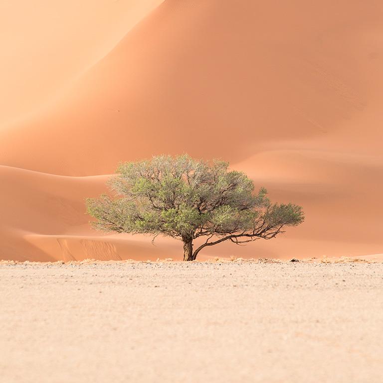 Dune 45 - Namibia Sossusvlei Desert Adventure