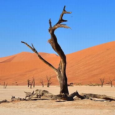 Deadvlei - Namibia Southern Odyssey