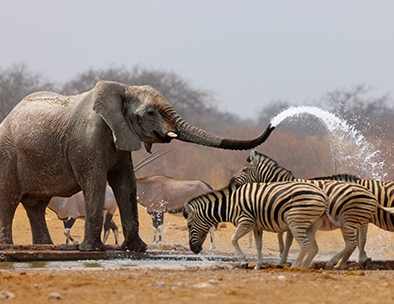 Elephant, zebra and gemsbok at a waterhole
