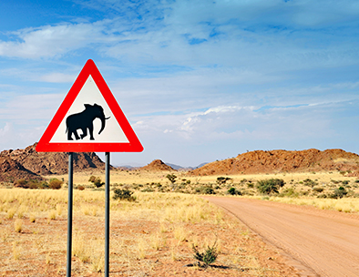 Desert elephant crossing - Guided Tours in Namibia