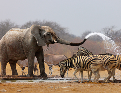 Elephant & Zebra - Guided Tours in Namibia