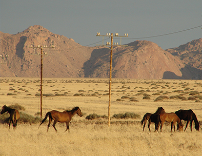 Wild horses of Aus - Guided Tours in Namibia