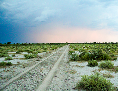 Open Road in Etosha - Individual Travel Tours
