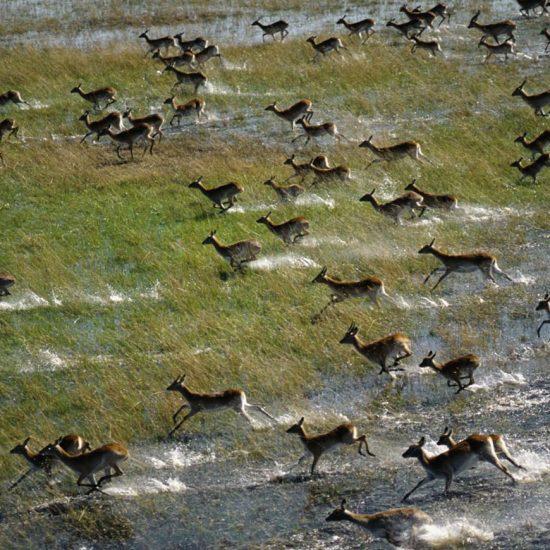 Namibia Etosha & Zambezi Safari